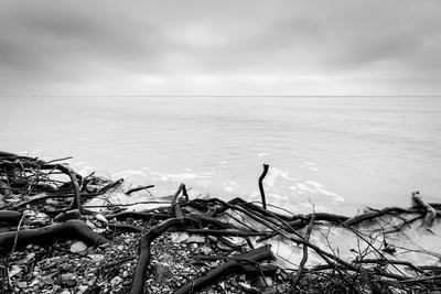 Broken Tree Branches on the Beach after Storm. Sea on a Cloudy Cold Day. Black and White, far Horiz