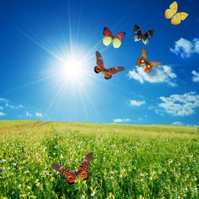Butterfly Spring Field. A Group O Colorful Butterflies In The Spring Summer Grass Land by Michal Bednarek