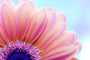 Flower Close-Up, Sunlight from Behind. Fresh, Spring Background by Michal Bednarek