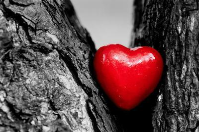 Red Heart in a Tree Trunk. Romantic Symbol of Love, Valentine's Day. Black and White with Red.