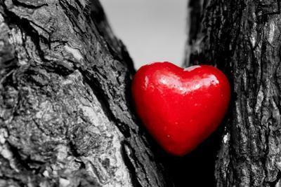 Red Heart in a Tree Trunk. Romantic Symbol of Love, Valentine's Day. Black and White with Red. by Michal Bednarek