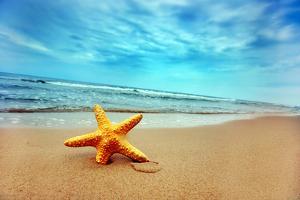 Starfish on the Beach by Michal Bednarek