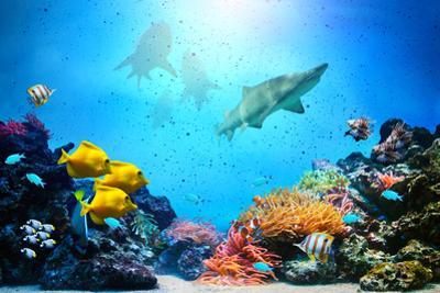 Underwater Scene by Michal Bednarek