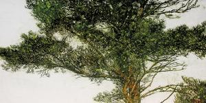 Pine Tree by Micheal Zarowsky