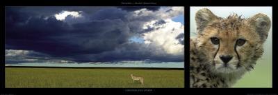 Cheetah and Storm