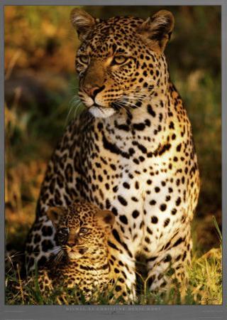 Leopard with Infant at Masai-Mara, Kenya