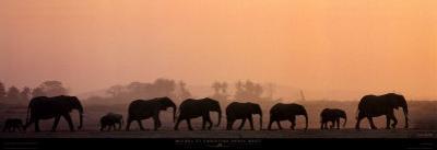 Troupeau d'Elephants