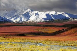 Alaska Range, Autumn, Taiga, Denali National Park, Alaska, USA by Michel Hersen