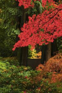 Autumn at Portland Japanese Garden, Portland, Oregon, USA by Michel Hersen