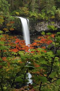 Autumn at South Falls, Silver Falls State Park, Oregon, USA by Michel Hersen