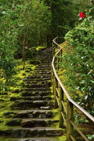 Camellia, Wild Garden, Portland Japanese Garden, Portland, Oregon, Usa by Michel Hersen