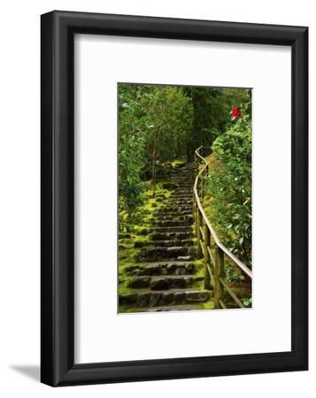 Camellia, Wild Garden, Portland Japanese Garden, Portland, Oregon, Usa