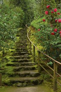 Camellias Steps, Portland Japanese Garden, Portland, Oregon, Usa by Michel Hersen