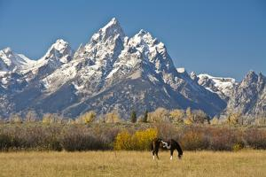 Horse and Grand Tetons, Moose Head Ranch, Grand Teton National Park, Wyoming, USA by Michel Hersen