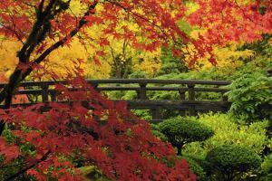 Moon Bridge in Autumn, Portland Japanese Garden, Portland, Oregon, USA by Michel Hersen