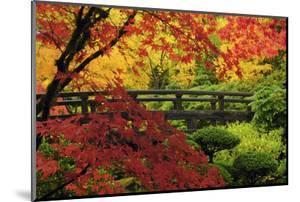 Moon Bridge in Autumn, Portland Japanese Garden, Portland, Oregon, USA by Michel Hersen