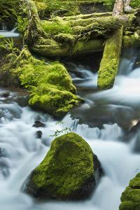 Panther Creek, Gifford-Pinchot Nf, Carson, Washington, Usa by Michel Hersen