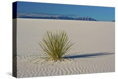 Sand Patterns, Yucca, White Sands Nm, Alamogordo, New Mexico