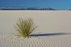 Sand Patterns, Yucca, White Sands Nm, Alamogordo, New Mexico by Michel Hersen