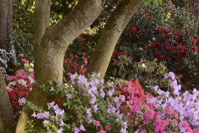 Spring Colors at Crystal Springs Rhododendron Garden, Oregon, USA