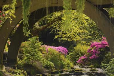 Spring Colors at Crystal Springs Rhododendron Garden, Oregon, USA by Michel Hersen