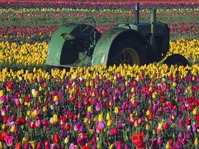 Tractor in the Tulip Field, Tulip Festival, Woodburn, Oregon, USA by Michel Hersen