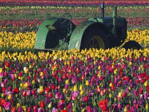 Tractor in the Tulip Field, Tulip Festival, Woodburn, Oregon, USA by Michel Hersen