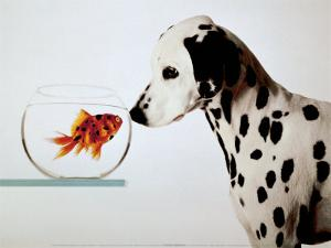 Dalmation Dog Looking at Dalmation Fish by Michel Tcherevkoff