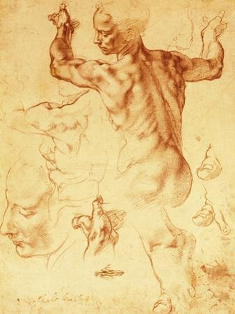 Anatomy Sketches (Libyan Sibyl) by Michelangelo Buonarroti