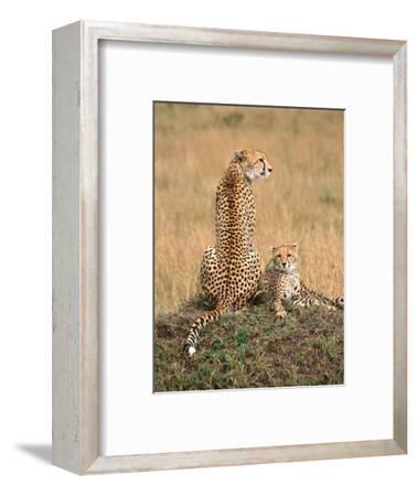 Cheetah & Cubs, Termite Mound, Masai Mara, Keny