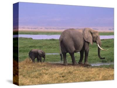 Kenya, Amboseli National Park, Elephant with Offspring
