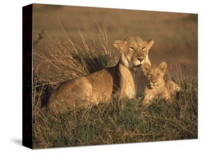 Lioness and Cub, Masai Mara Reserve, Kenya