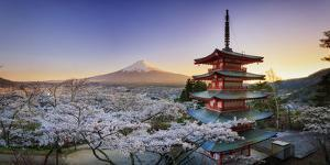 Japan, Yamanashi Prefecture, Fuji-Yoshida, Chureito Pagoda, Mt Fuji and Cherry Blossoms by Michele Falzone