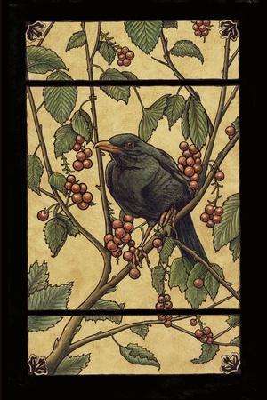 Apple Raven
