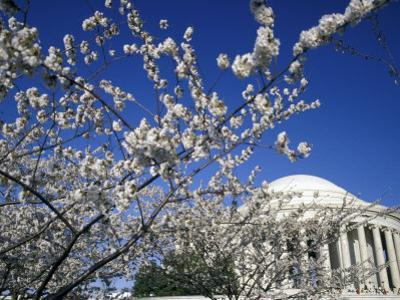 Cherry Blossom Festival and the Jefferson Memorial, Washington DC, USA