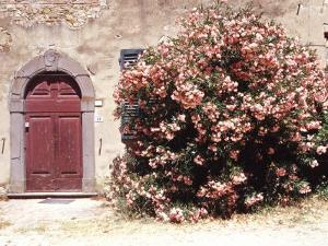 Door and Pink Oleander Flowers, Lucardo, Tuscany, Italy by Michele Molinari