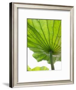 Lotus Leaf Texture by Michele Molinari