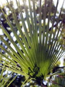 Palm Leaf and Shadows by Michele Molinari
