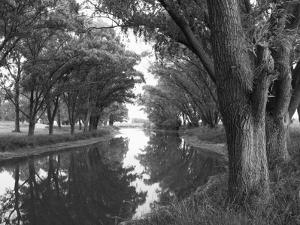Shaded River in the Pampa Region, Argentina by Michele Molinari