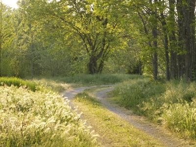 Springtime Path in the Countryside, Mantova/Mantua, Italy