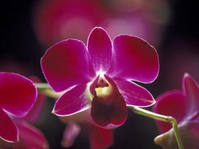 Taman Orchid, Kuala Lumpur, Malaysia