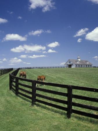 Thoroughbred in the Countryside, Kentucky, USA