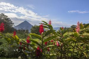 Arenal Volcano in Costa Rica with tropical flowers. by Michele Niles