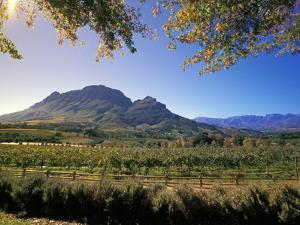 Constantia Wineries, Cape Town, South Africa by Michele Westmorland