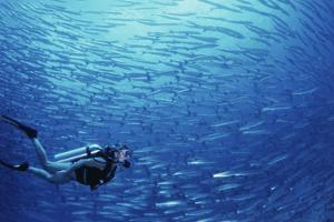 Indonesia, Scuba Diving in Sea by Michele Westmorland