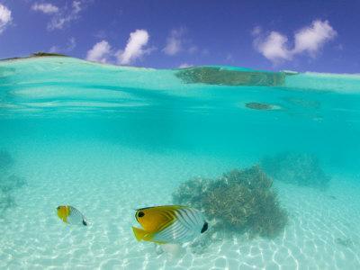 Le Maitai Dream Fakarava Resort, Fakarava, Tuamotus, French Polynesia
