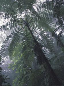 Monteverde Cloud Forest, Costa Rica by Michele Westmorland