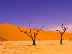 Skeleton Trees in Dead Vlei, Namibia World Heritage Site, Namibia by Michele Westmorland