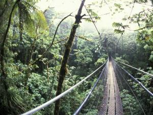 Sky Walk, Monteverde Cloud Forest, Costa Rica by Michele Westmorland