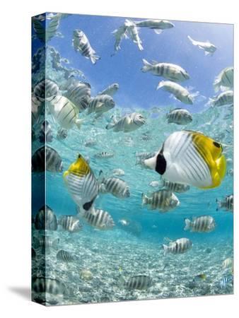 Tropical Fish in Bora-Bora Lagoon